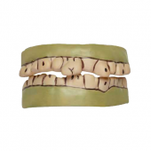 Widmann - Korkunç Dişler Yeşil Canavar